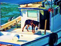 ~ Bootshund ~ by Sandra  Vollmann
