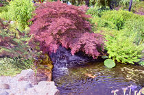 Japanese-garden-waterfall