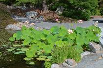 Lotus-pond-garden