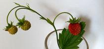 branch of strawberries  von feiermar