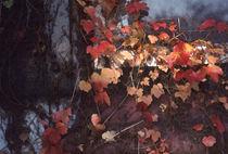 Autumn Leaves with Sun von Elizabetha Fox