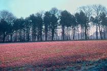 Frost Fields  by Elizabetha Fox