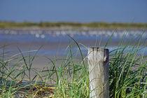 Dünengras von nordfriesland-und-meer-fotografie