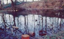 The Old Pond  von Elizabetha Fox