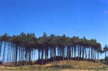 Freshfield Pines  von Elizabetha Fox