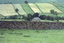 Strip Fields von Elizabetha Fox