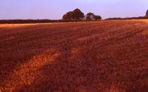 Harvest Field von Elizabetha Fox