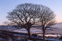 Winter-tree-in-the-snow