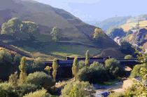 Sunlit Valley  von Elizabetha Fox