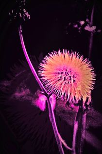 Marsblume ? by leddermann