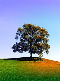 Posierender Baum am Hügel von Patrick Jobst
