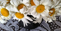 Daisies-in-a-clay-pot-crop-i