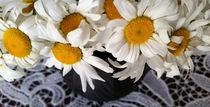 daisies in a clay pot by feiermar