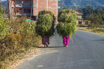 Carrying the fodder by Bikram Pratap Singh