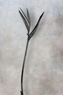 Psittacorum von Cesar Palomino