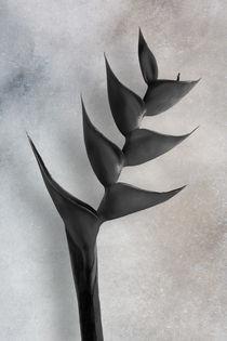 Heliconia Bihai by Cesar Palomino