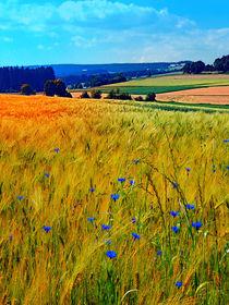 Felder im Sommer mit Blumen und Gegend von Patrick Jobst