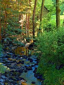 Wald, Fluss, ein Tal und der Sommer von Patrick Jobst