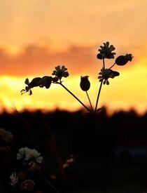 Sonnenuntergang auf dem Land by Gertrud  Aulbach