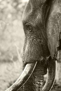 Bull Elephant portrait in sepia von Yolande  van Niekerk