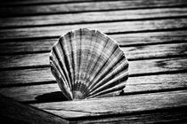 Scallop Shell and Timber von David Hare