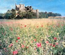 Castle and flower Meadow  by Elizabetha Fox