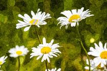 The Daisy Field Art by David Pyatt