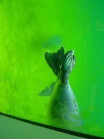 Seehunde von ulrike-gerspacher