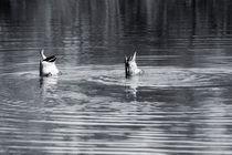 Synchronschwimmer by Bastian  Kienitz