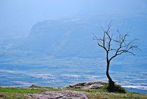 lonely tree... 2 von loewenherz-artwork