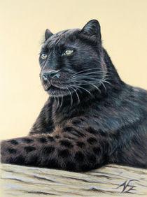 Jaguar - Panther von Nicole Zeug