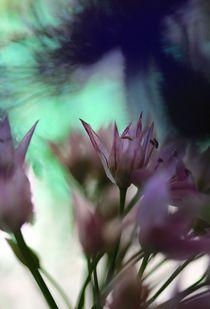SOMBRA by © Ivonne Wentzler