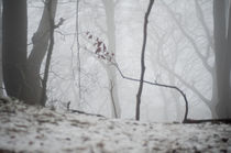 leben - nebel - leben - nebel by lilithdavinci