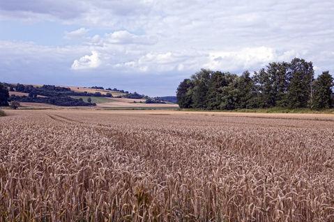 Dauernheim-geiss-nidda20x30