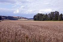 Felder in der Wetterau von Marc Stephan