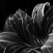 The Dark Beauty by Clare Bevan