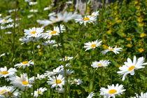 Blumenweise von Ute Bauduin