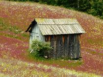 Small Dolomites Barn in Meadow  by Elizabetha Fox