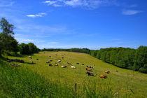 Kühe auf der Viehweide am Waldrand von Ronald Nickel