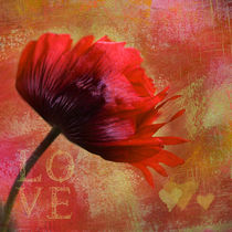 Big Love von Annie Snel - van der Klok