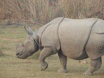 One horned Rhinocerous von tashdique  mehtaj