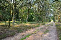 Sommer im Heidewald von gscheffbuch