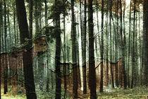 Lichtbruch von Bastian  Kienitz