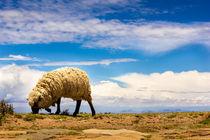Schaf im Himmel von Arne Tiedemann