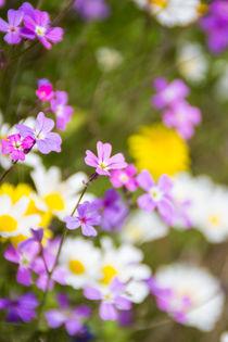 Spring flowers von Lana Malamatidi