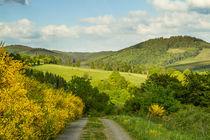 Ginster blüht am Wegesrand von Heidi Bücker