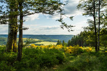 Waldlichtung von Heidi Bücker