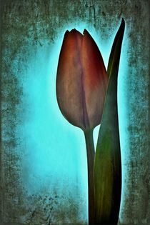 Tulip day von leddermann