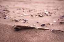 Scheidemuschel im Sand von framboise