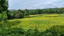 Buttercup Meadows von Colin Metcalf